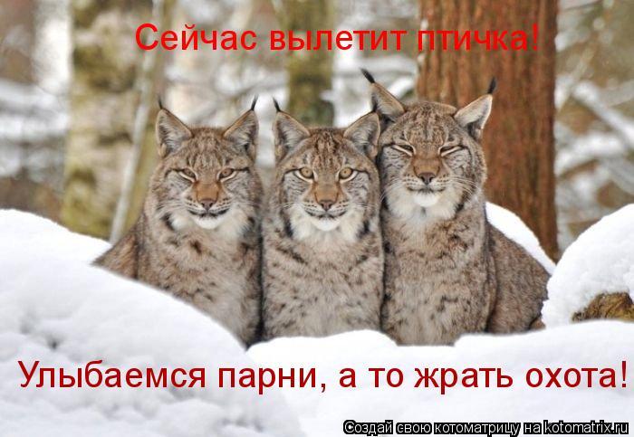 Котоматрица: Сейчас вылетит птичка! Улыбаемся парни, а то жрать охота!