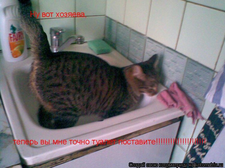 Котоматрица: Ну вот хозяева, теперь вы мне точно туалет поставите!!!!!!!!!!!!!!!!!!!!!