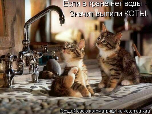 Котоматрица: Если в кране нет воды - Значит выпили КОТЫ!