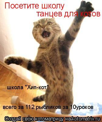 """Котоматрица: Посетите школу танцев для котов школа """"Хип-кот""""  всего за 112 рыбликов за 10уроков"""
