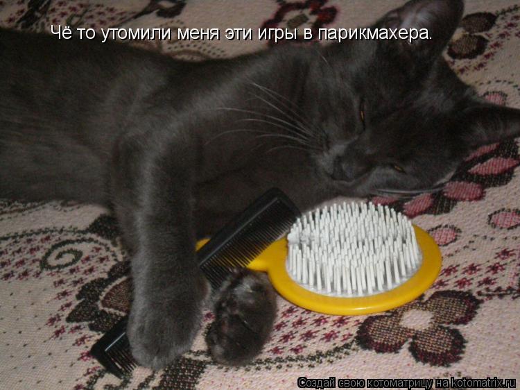 Котоматрица: Чё то утомили меня эти игры в парикмахера.