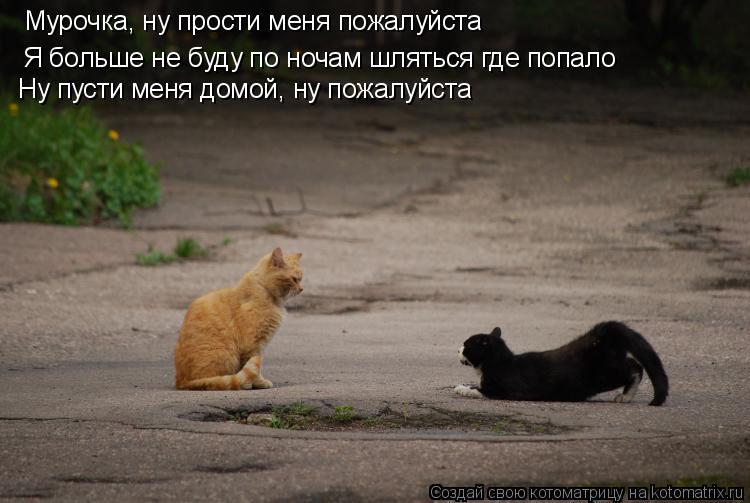 Котоматрица: Мурочка, ну прости меня пожалуйста Я больше не буду по ночам шляться где попало Ну пусти меня домой, ну пожалуйста