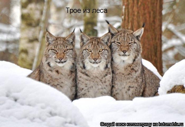 Котоматрица: Трое из леса