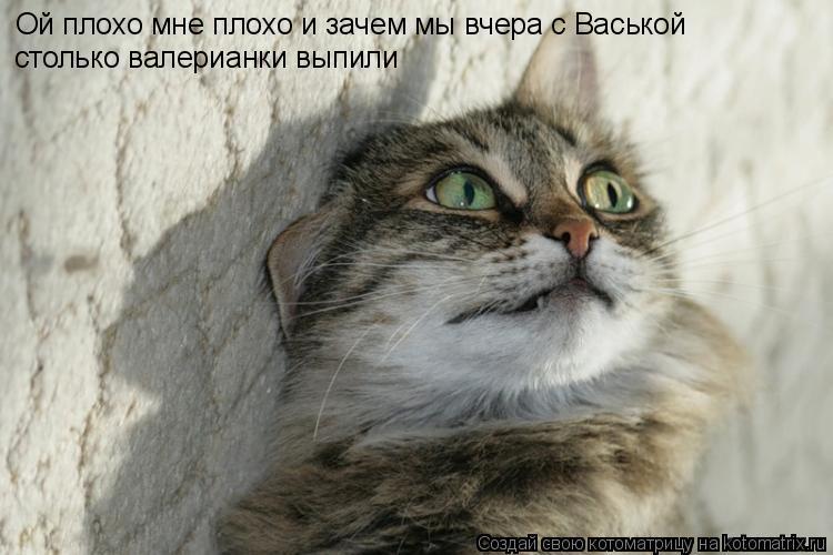 Котоматрица: Ой плохо мне плохо и зачем мы вчера с Васькой столько валерианки выпили