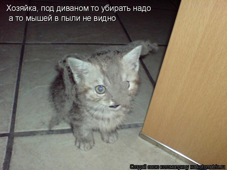 Котоматрица: Хозяйка, под диваном то убирать надо а то мышей в пыли не видно