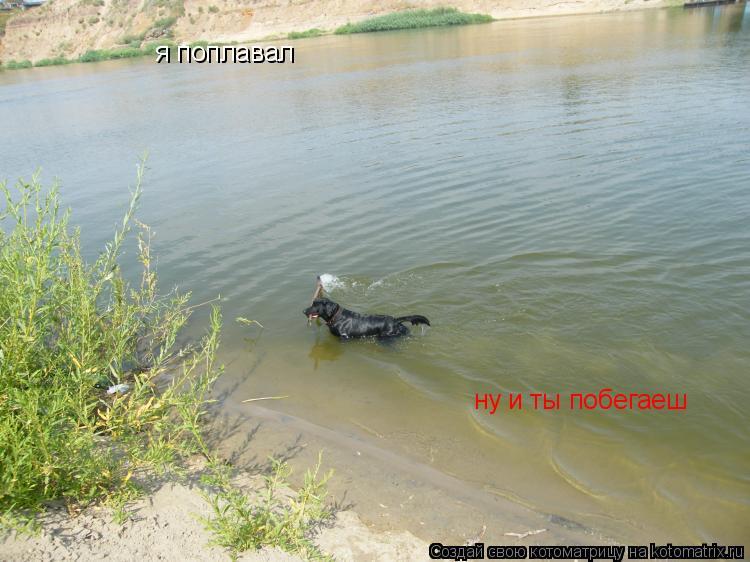 Котоматрица: я поплавал  я поплавал  ну и ты побегаеш