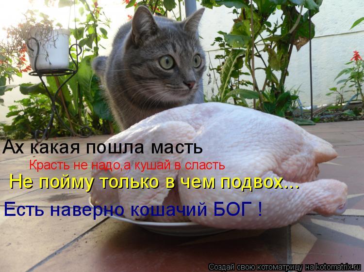 Котоматрица: Ах какая пошла масть Красть не надо,а кушай в сласть Не пойму только в чем подвох... Есть наверно кошачий БОГ !