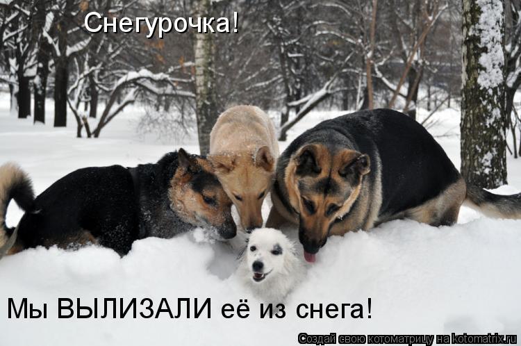 Котоматрица: Снегурочка! Мы ВЫЛИЗАЛИ её из снега!