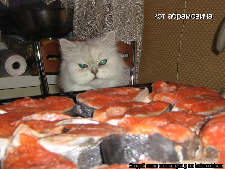 Котоматрица: кот абрамовича кот абрамовича