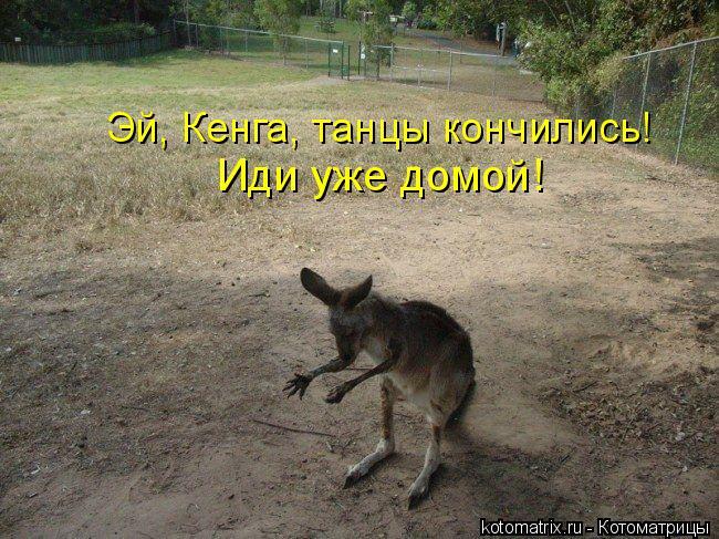 Котоматрица: Эй, Кенга, танцы кончились!  Иди уже домой!