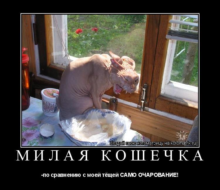Котоматрица: Милая кошечка -по сравнению с моей тёщей САМО ОЧАРОВАНИЕ!