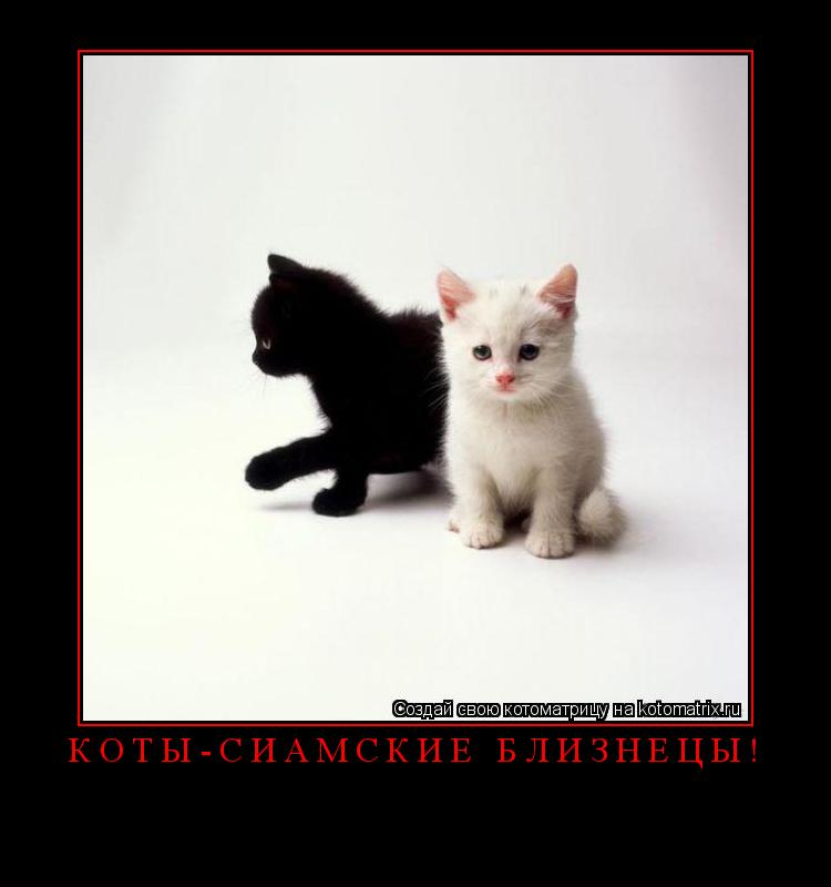 Котоматрица: Коты-сиамские близнецы!