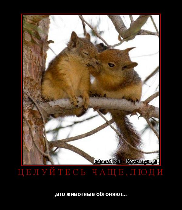 Котоматрица: Целуйтесь чаще,люди ,ато животные обгоняют...