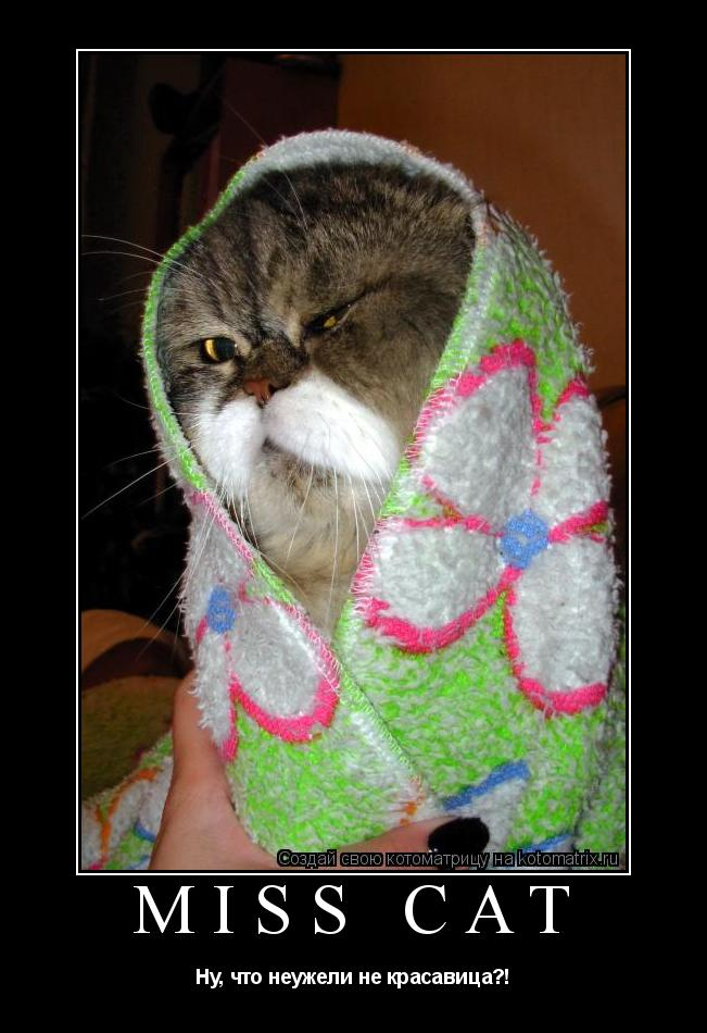 Котоматрица: МIss CAT Ну, что неужели не красавица?!
