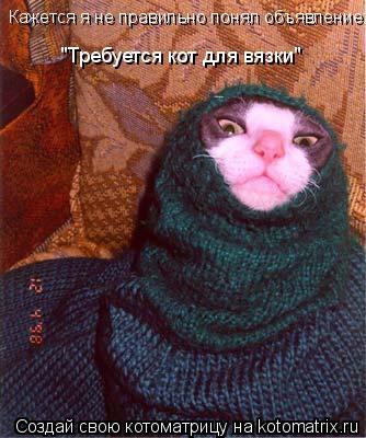 """Котоматрица: Кажется я не правильно понял объявление: """"Требуется кот для вязки"""""""