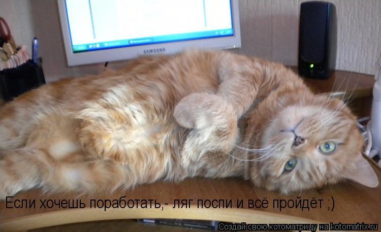 Котоматрица: Если хочешь поработать,- ляг поспи и всё пройдёт ;)
