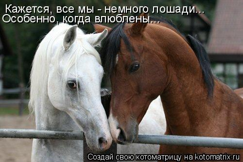 Котоматрица: Кажется, все мы - немного лошади... Особенно, когда влюблены...
