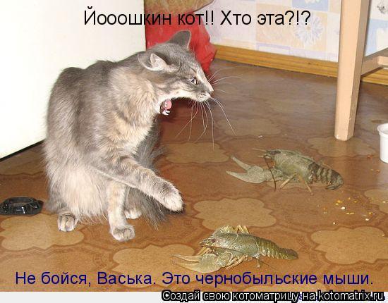Котоматрица: Йооошкин кот!! Хто эта?!? Не бойся, Васька. Это чернобыльские мыши.