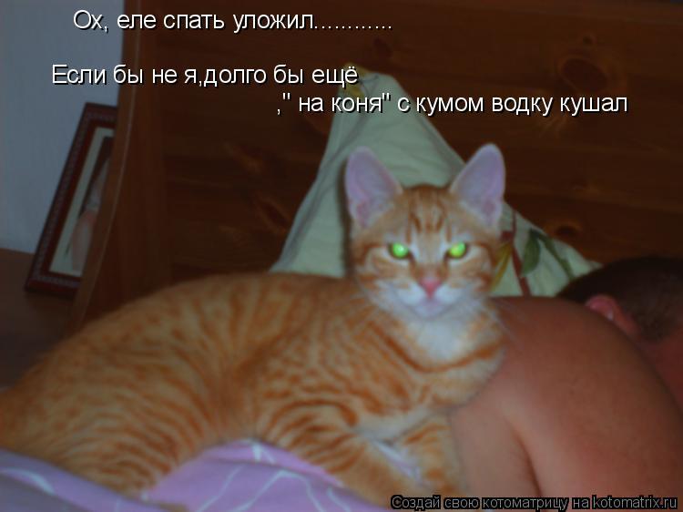 """Котоматрица: Если бы не я,долго бы ещё  Ох, еле спать уложил............ ,"""" на коня"""" с кумом водку кушал"""