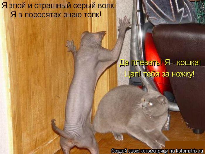 Котоматрица: Я злой и страшный серый волк, Я в поросятах знаю толк! Да плевать! Я - кошка! Цап! тебя за ножку!