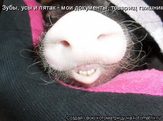 Котоматрица: Зубы, усы и пятак - мои документы, товарищ гаишник!