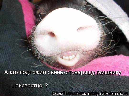 Котоматрица: А кто подложил свинью товарищу гаишнику неизвестно ?