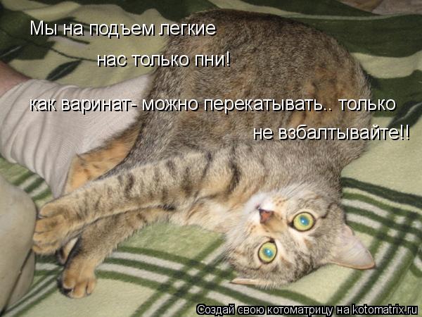 Котоматрица: Мы на подъем легкие нас только пни! как варинат- можно перекатывать.. только  не взбалтывайте!!