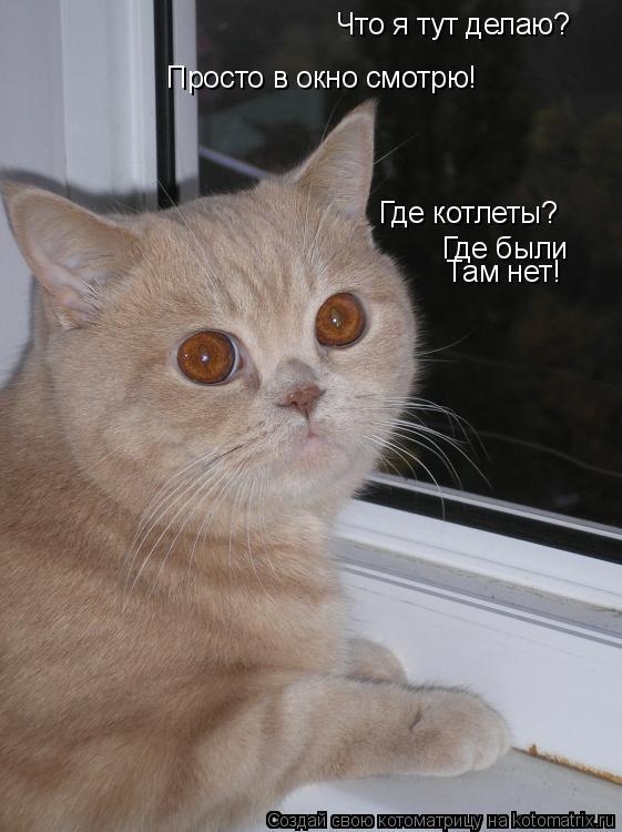 Котоматрица: Что я тут делаю? Просто в окно смотрю! Где котлеты? Где были Там нет!