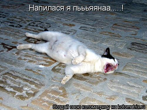 Котоматрица: Напилася я пьььяянаа.....!