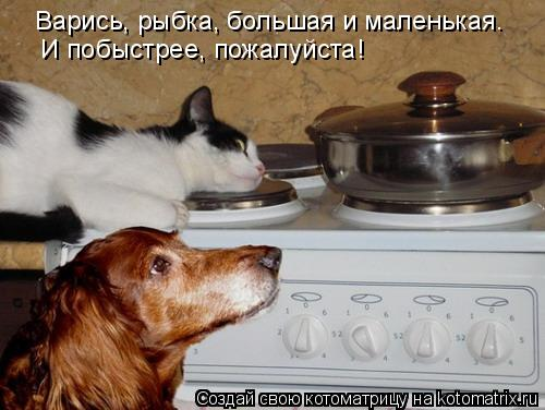Котоматрица: Варись, рыбка, большая и маленькая.  И побыстрее, пожалуйста!