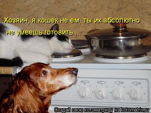 Котоматрица: Хозяин, я кошек не ем, ты их абсолютно   Хозяин, я кошек не ем, ты их абсолютно   не умеешь готовить.......