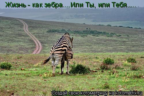 Котоматрица: Жизнь - как зебра....Или Ты, или Тебя.....