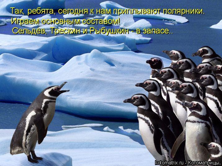Котоматрица: Так, ребята, сегодня к нам приплывают полярники. Играем основным составом!  Сельдёв, Трескин и Рыбушкин - в запасе..