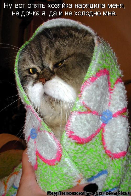 Котоматрица: Ну, вот опять хозяйка нарядила меня,  не дочка я, да и не холодно мне.