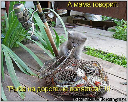 """Котоматрица: А мама говорит: """"Рыба на дороге не воляется!"""" !!!"""