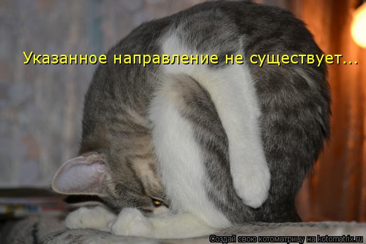 Котоматрица: Указанное направление не существует...