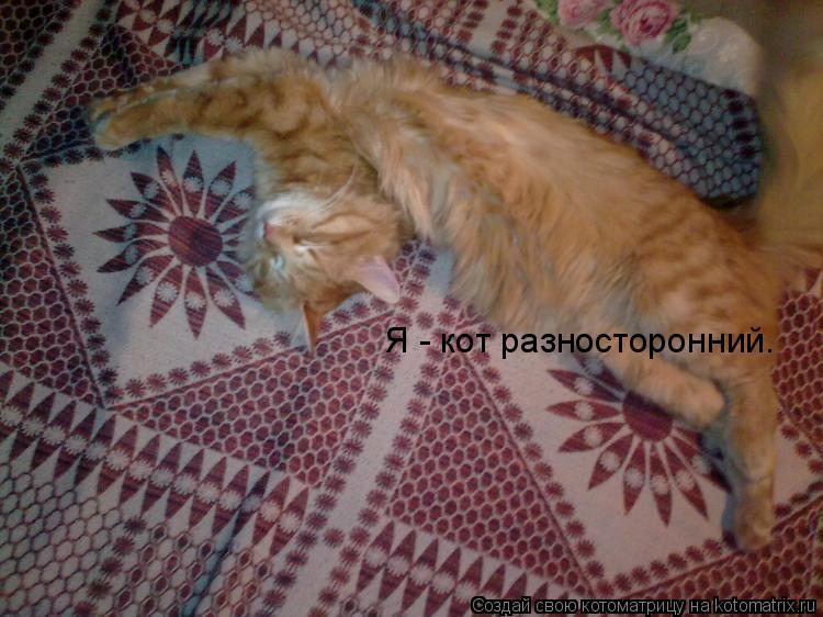 Котоматрица: Я - кот разносторонний.