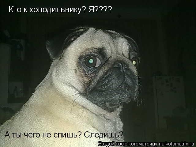 Котоматрица: Кто к холодильнику? Я???? А ты чего не спишь? Следишь?