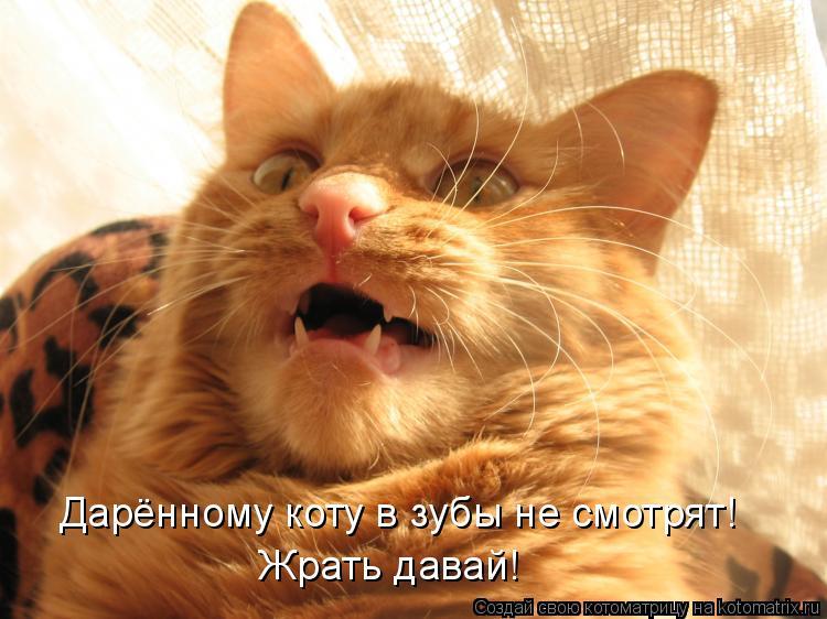 Котоматрица: Дарённому коту в зубы не смотрят! Жрать давай!