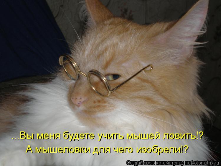 Котоматрица: ...Вы меня будете учить мышей ловить!? А мышеловки для чего изобрели!?