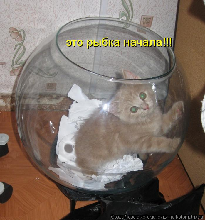 Котоматрица: это рыбка начала!!!