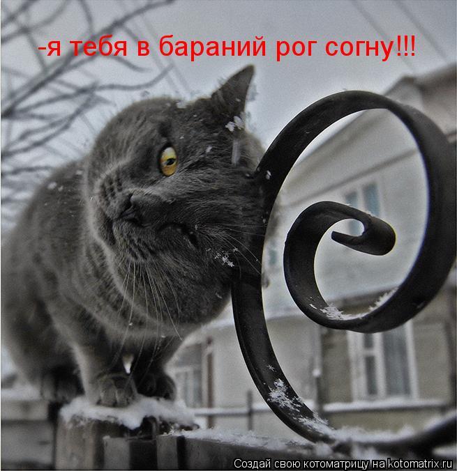 Котоматрица: -я тебя в бараний рог согну!!!