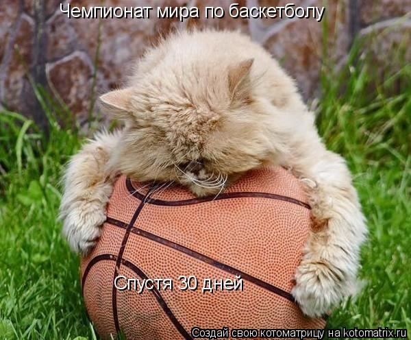 Котоматрица: Чемпионат мира по баскетболу Спустя 30 дней