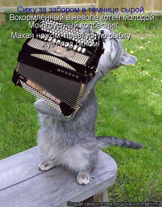 Котоматрица: Сижу за забором в темнице сырой Вскормлённый в неволе котён молодой Мой грустный колбасник Махая ножом, превкусную рыбку жуёт под окном!