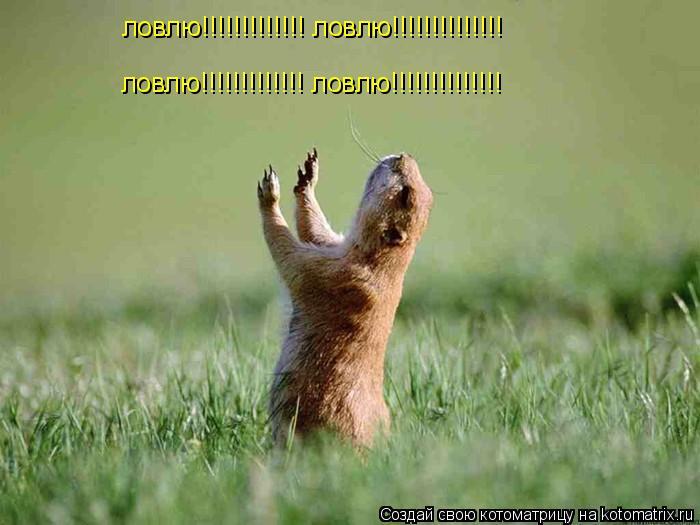 Котоматрица: ловлю!!!!!!!!!!!!! ловлю!!!!!!!!!!!!!! ловлю!!!!!!!!!!!!! ловлю!!!!!!!!!!!!!!