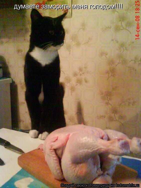Котоматрица: думаете заморить меня голодом!!!!