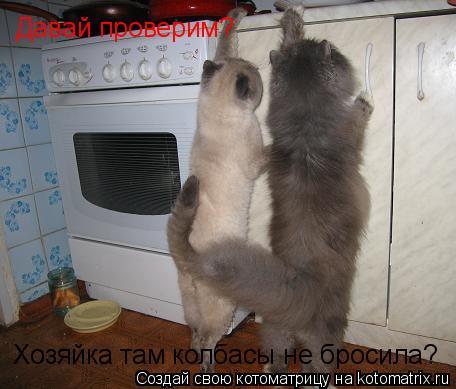 Котоматрица: Хозяйка там колбасы не бросила? Давай проверим?