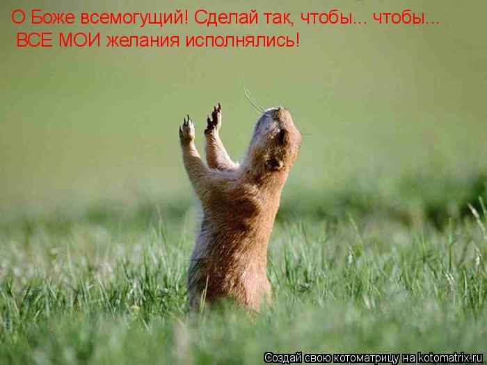 Котоматрица: О Боже всемогущий! Сделай так, чтобы... чтобы... ВСЕ МОИ желания исполнялись!