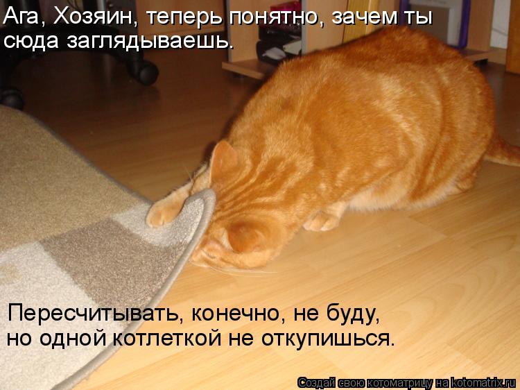 Котоматрица: Ага, Хозяин, теперь понятно, зачем ты сюда заглядываешь. Пересчитывать, конечно, не буду,  но одной котлеткой не откупишься.
