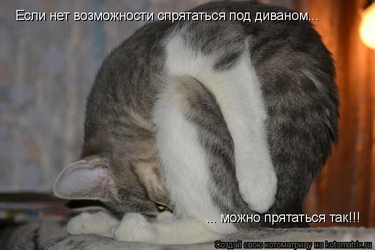 Котоматрица: Если нет возможности спрятаться под диваном... ... можно прятаться так!!!